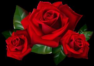 rose-300x213